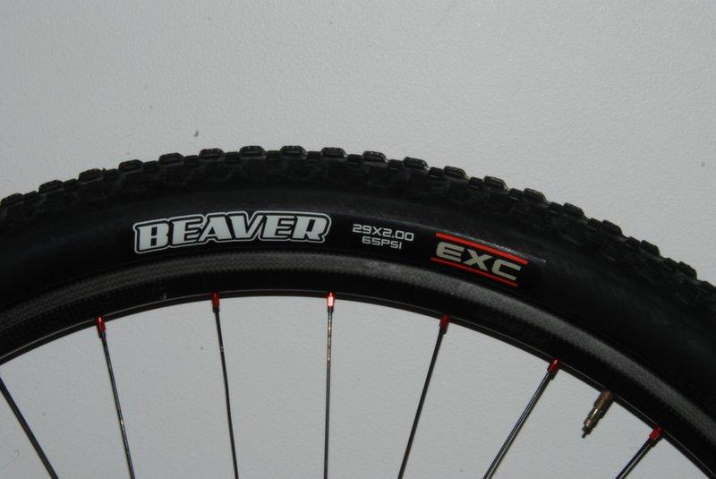 "Maxxis Beaver 2,0"""