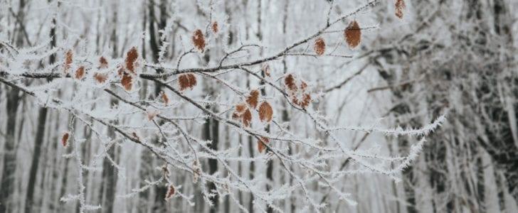 Top 5 over vintergrej jeg bruger hvert år